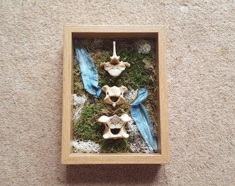 Framed large vertebrae