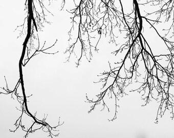 Gloomy Day||Simplistic Photography, Home Decor Art Print, Photography Art