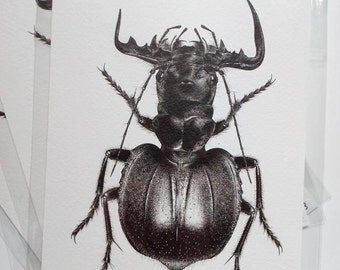 Manticora imperator A5 print 'Giant Postcard'
