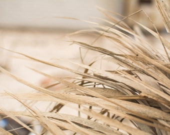 Dry Grass - Straw - Straw Photo - Hay - Straw-color - Hay Photo - Natural - Digital Photo - Digital Download - Instant Download - Home Decor