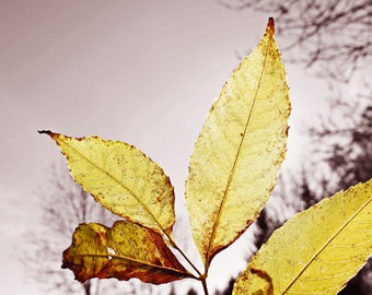 Leaf - Autumn - Fall - Leaf Photo - Yellow - Yellow Photo - Digital Photo - Digital Download - Instant Download - JPG