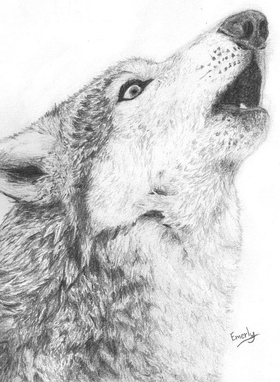 Lobo aullando impresin impresin de un dibujo de un lobo