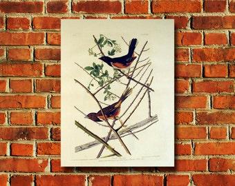 Audubon Bird Poster - #0580