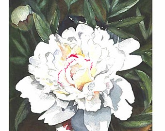 White Peony greeting card from original watercolor by a Franciscan Sister. 5 x 7  Free shipping.