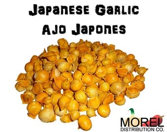 Japanese Garlic (Ajo Japones) Count per bag= 30-60-130-150-250-400 //100% Natural!//