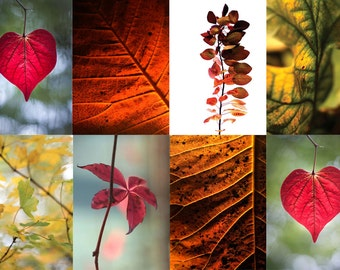 Autumn leaves (set of 8 greetings cards)