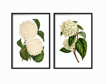 White Botanical Print Set - Botanical Print - Giclee Canvas Art Print - Antique Botanical Prints - Poster - White Floral Prints - Wall Art