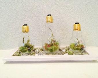 Lightbulb Nature Inspired Terrarium Home Decor - Fern in a Lightbulb - House Warming Gift - Modern Terrarium