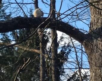 White Squirrel standing Watch