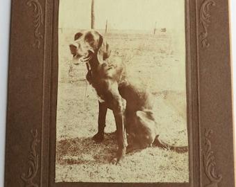 Dog Photo ca 1920 Dog Sitting Tongue Hanging Out Fun Image