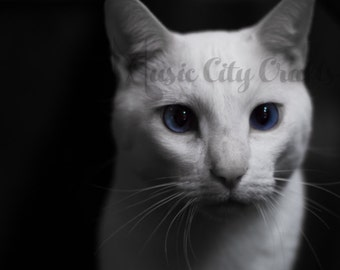 White Cat Picture   Cat Photography   Cat Wall Art   Cat Photo   Cat Photography   Cat Art   Animal Art   Animal Wall Art   Home Decor