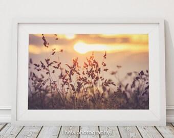 Silhouette sunset wildflowers landscape photography photo wall art