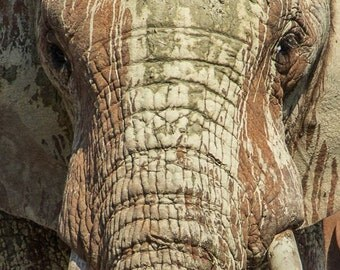 The painted elephant