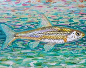 Minnow  12 x 16 acrylic on canvas