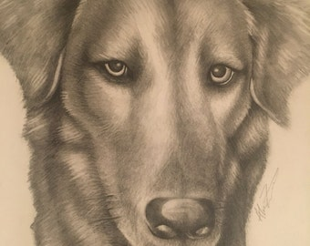 Personalized Pet Graphite Drawing