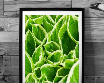 Leaves art photography, nature photography, spring, macro, instant download, printable art, wall art, home decor,