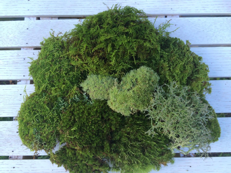 Moss Mats Moss Assortment Pack Terrariums Crafts Miniatures Fairy