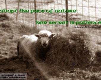 Lamb Poster Quote Photograph
