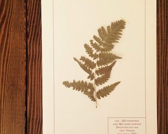 Herbarium 25