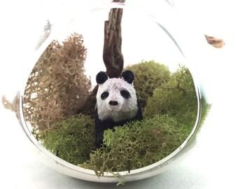 Panda Moss Terrarium