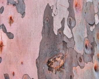 Pink and Gray Tree Bark, Eucalyptus Bark, 5x7 Photo, 8x10 Photo, Abstract Photo, Tree Still Life, Peeling Bark Photo, Pink and Gray Decor
