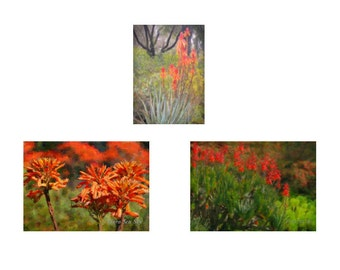 Orange Flower Photos, Red Flower Photos, 3  5x7 Photos, Painterly Aloe Set, Succulents Photo, California Garden Photo
