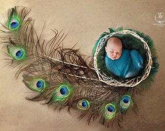 Newborn Digital Backdrop feather/ prop (Percy)
