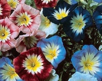 25+ Ensign Mix Morning Glory / Perennial Flower Seeds