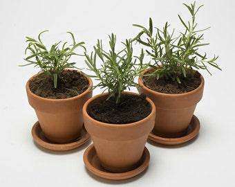 Terracotta Herb Garden Kit
