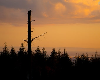 Instant download - Lone Tree Sunset