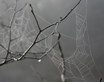 Black and White Spider Web Photography, Spider Web Print, Black and White Photography Print