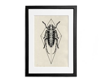 Insect Print illustration A4 Poster Wall Decor Naturalistic Illustration