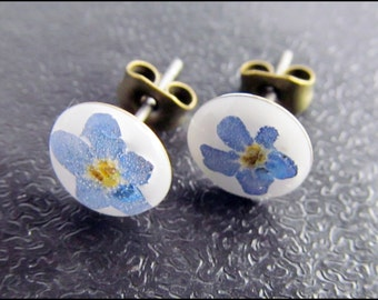 Small forget-me-not flower plug white