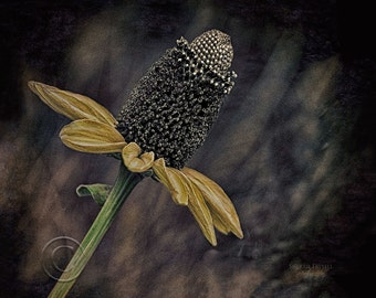 Solace for the Soul,photo art,photo,flower,color,gift,Home Decor, Home Decor Office, Award Winning,Horizontal