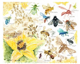 Native Bees Poster -- Educational and Stunning