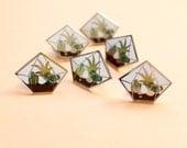 Terrarium pin - enamel pin - lapel pin - cactus pin - geometric terrarium - succulent terrarium - enamel jewellery - cactus gift
