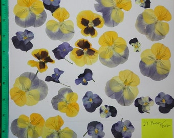 Real Pressed Dried Flowers 27 Pansy or Viola in assorted sizes and in Blues and Yellow Pressed Flowers Ready for your project Craft supply