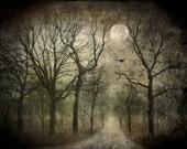 FOREST MOON, Blackbirds, Digital Collage, Raven Photo, Halloween Decor, Goth, Blue Night Sky, Pagan Art, SAMHAIN, Full Moon, Twilight, Trees