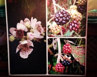 Bramble and Berry Wild Blackberries Oregon Photo Gallery Wrap Canvas