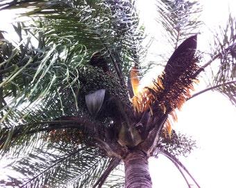 Palm Tree underneath shot digital download free use