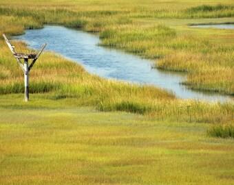 Beach Decor Ocean Osprey Nest in the Salt Marsh Landscape Stone Harbor New Jersey Fine Art Photograph