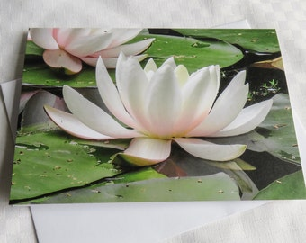 Waterlily Card, Greetings Card, Blank Card, Nature Photography Card, Pink Waterlily, Flower Card