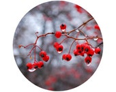 Winter Home Decor, Red Berries Photograph, Winter, Holiday, Christmas Decor, Grey, Black, Circle, Round Image 8x8 inch Print, W