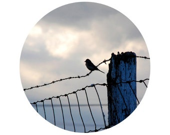 Bird Photograph, Bird Home Decor, Blue, Grey, Black, Bird on a Wire, Fence, Country Decor, Circle, Round Image 8x8 inch Print -