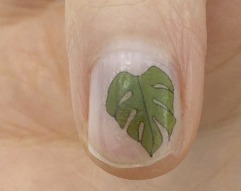 house plant leaf nail transfers - illustrated monstera / cheese plant nail art decals
