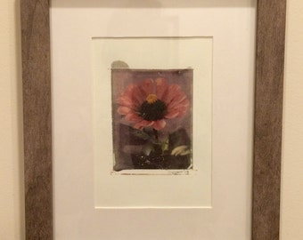 Polaroid transfer - framed original Pink Zinnia in gray frame