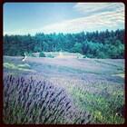 LavenderJewelry