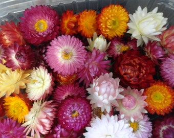 Choose your Natural Straw Flowers FL 551