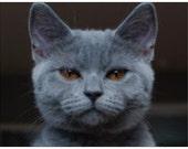 Please HELP SICK KITTEN--Jacob the Rescue Kitten Has Rare Condition--Free Skin Cream--Animal Rescue