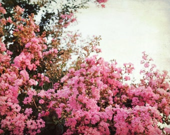 """Pink Floral Wall Art - Botanical Print - California Flowers - vintage style - flower photography - large wall art 16x20 print """"Crepe Myrtle"""""""